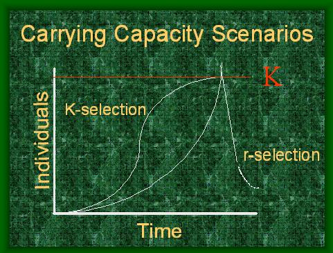 CARRYING CAPACITY SCENARIOS.JPG